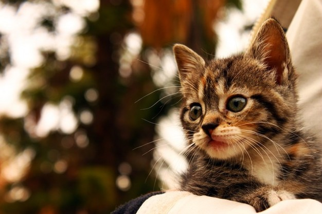 animaux-chat-chaton-animaux_121-56727