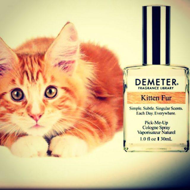 Coucou les filles jai essay le parfum au chaton !hellip