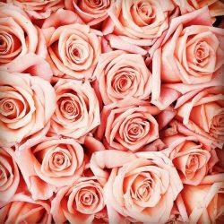 Qui n'aime pas les roses? Moi, j'adore  #love #pink #rose #beautiful #bloggers #beauteronde #photoftheday #photos #socialenvy #pleaseforgiveme #femme #woman #blog #snapshot #instagoog #moment #nantes #france #french #fragrance #parfum
