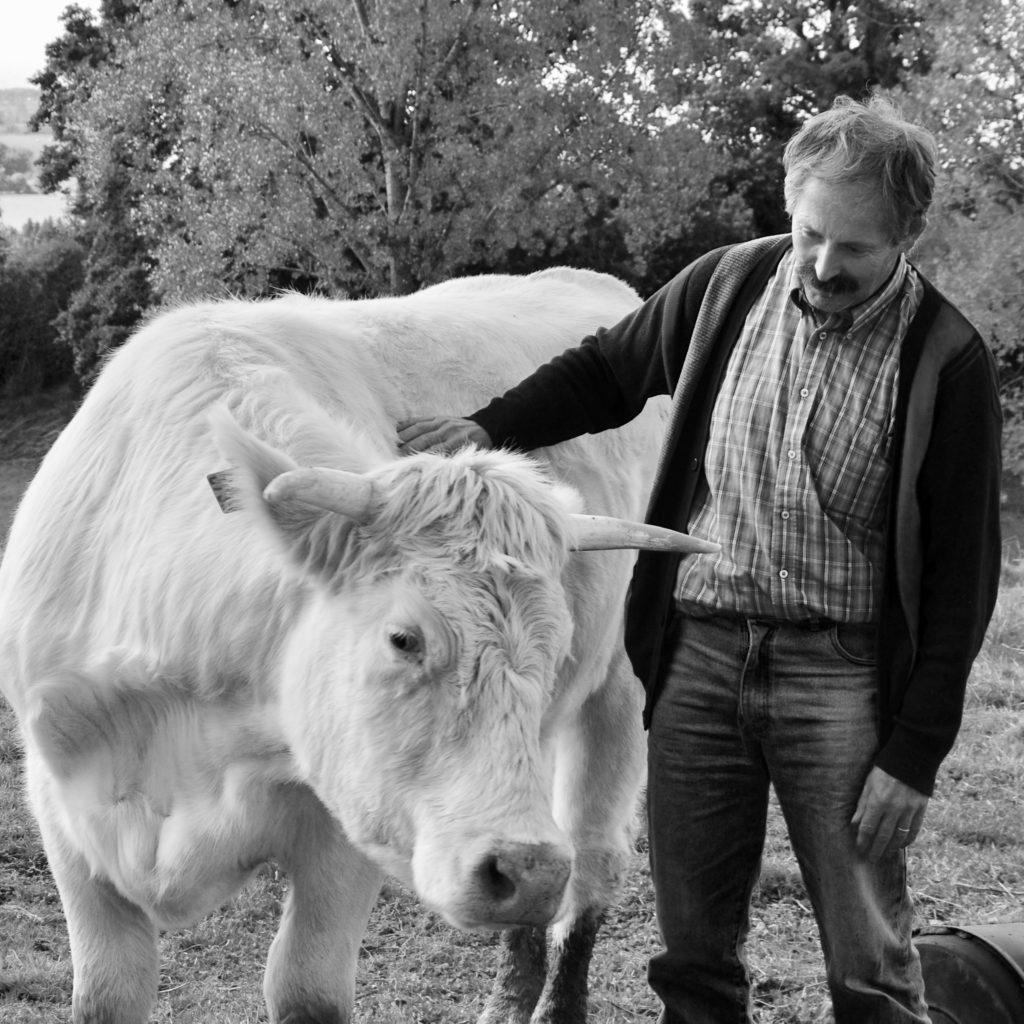 bernard et une vache carré gros plan n&B