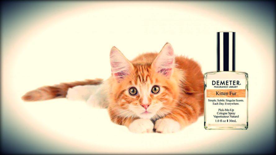 Le parfum de chaton de « Demeter » est un must-have pour les amateurs de chats !