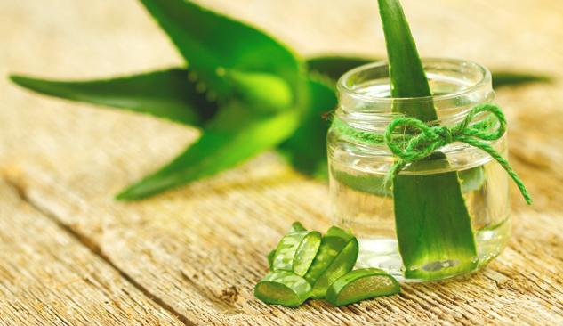 Astuce santé : les vertus de l'Aloe vera… Pourquoi je suis fan ?